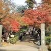 北鎌倉の紅葉 暖冬と塩害