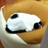 ビーズソファ:猫もダメになる