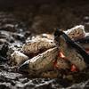 炎の導きのあらんことを ―日本に於ける「火継ぎ」の文化―