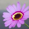 鉢を使わずマンションのベランダで花を育ててみた