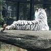 平川動物公園(鹿児島市) 【コアラや、ホワイトタイガーのいる動物園】