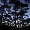 宮崎県で松林の大自然を満喫できるキャンプ場「えびの高原キャンプ村」