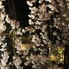 奈良県のおススメ桜スポット 専称寺 夜桜ライトアップ