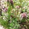 春の雑草天国