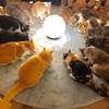 【イベントレポート】第121回ミンエリ猫カフェ貸切もふもふ人狼&ボドゲ会vol.26