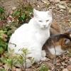 三宮のトア公園の猫たちです。