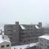 雪上サバイバル!東北出身の管理人が教える大雪の日の生き残り方
