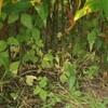 立秋の庭。
