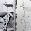 「動物の描き方 by  Jack Hamm 」、修了しました!