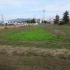 草刈り9月