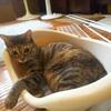 【猫ケージの解体と撤去】サヨナラ猫ケージ。
