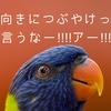 【Twitter】前向きにつぶやけって言うなあああ!!【非運用術】