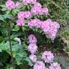 いとのもりのお菓子教室 桜から新茶の季節へ♪