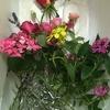 バラがきれいに咲いてくれました!!