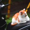 ちょっぴり不思議な野良猫の様子