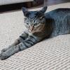 買い替えたラグマットが猫の爪とぎになった件