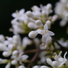 初夏を彩る花 5
