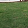外構を考える~第16回「芝生にスギナが…」