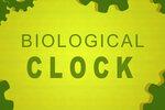 体内時計が狂っていると「思い出す力」も衰える。不規則な生活は今すぐ改善せよ