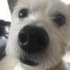 余命0日。3月に亡くなったわが家の愛犬・ジャックラッセルテリア 「小粒」の最後。何度も号泣したボク