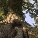 木登り日和