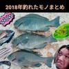 【2018年】釣れたモノまとめ