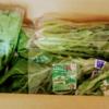 野菜の福袋を取り寄せたので中身を公開するよ【きづファーム】