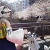 フウナ in リアル 2021・3月 目黒川 「桜」~中目黒~