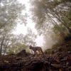 GoPro(ゴープロ)で撮った山の写真はマイナスイオンが出てるみたいだぞっ!  #gopromountain