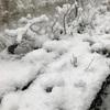 盆栽の凍結どうしてますか?