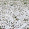 雪のなか東急線