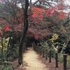 秋の山にて