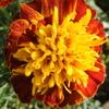 11月5日誕生日の花と花言葉歌句