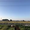 キャベツ①畝の除草を行いました