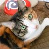 【愛猫日記】毎日アンヌさん#81