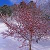 漢方体験:寒がり、冷え性、むくみ、腰痛の漢方相談で…若木山の山茱萸