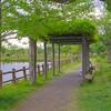 乙戸沼公園の藤棚~つくば市とその周辺の風景写真案内(436)