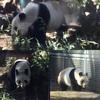 上野動物園に行ってきました!