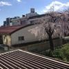 3752 レトロ病院の桜