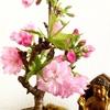 今日の桜井。〜ついに開花!〜