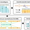 GATK HaplotypeCallerの使い方 前編 -GATK解説シリーズ-part 5
