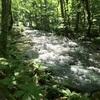 【ひとり旅】奥入瀬渓流。渓流沿いをぷらぷらり。