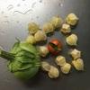 赤いミニトマトと青ナス