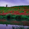 リーフでお出かけ!彼岸花の赤い絨毯 津屋川堤防【東海ドライブ】
