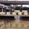 #鄭州市洪水#トンネル内で車両水没#1000人以上被災か❕