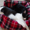 今日の黒猫モモ&白黒猫ナナの動画ー671