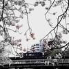 EF210 運河の桜