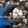 ニンニクの収穫が始まりました(富良野在来) 2019-2020