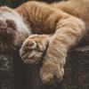 月7万円生活で猫のようにマイペースに生きる。支出の内訳とコツ。