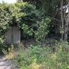 まるでジャングル。除草しても生えてくる庭の雑草がすごい